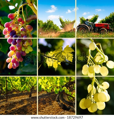 vineyard collection - stock photo
