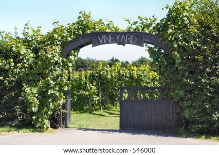 Vineyard entrance - stock photo