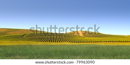 vineyard hills - stock photo