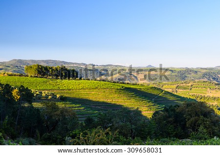 vineyard hills in the river Douro valley, Portugal - stock photo