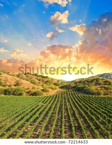 vineyard in a mountain valley at the sunset - stock photo