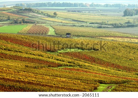 Vineyard in autumn colors. The Rhine Valley, Germany