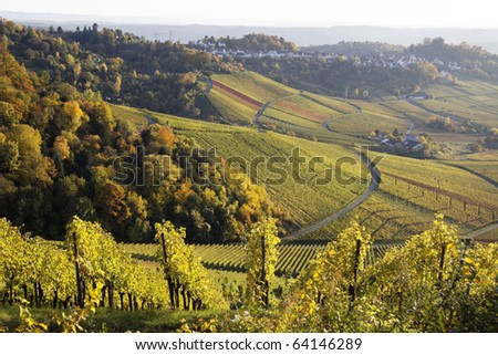 Vineyard in autumn in Stuttgart (Kapplelberg), Germany - stock photo