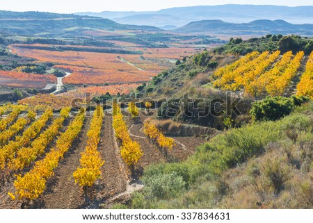 Vineyard in Autumn, La Rioja (Spain) - stock photo