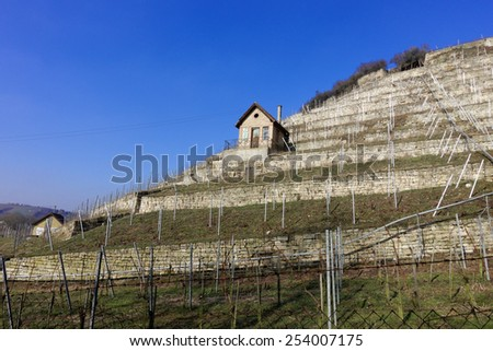 Vineyard in Bad Cannstatt with winemakers house, Germany - stock photo