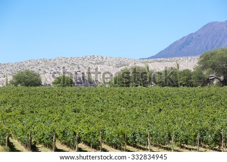 Vineyard in Cafayate, in the North of Argentina. Salta Province. - stock photo