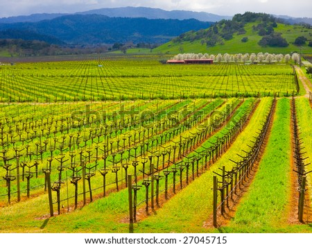 Vineyard in California in Spring - stock photo