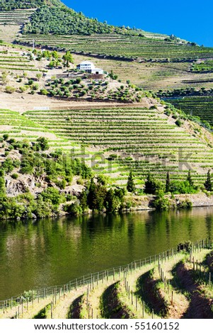 vineyard in Douro Valley, Portugal - stock photo