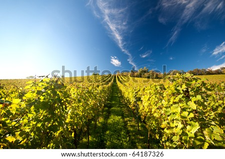 Vineyard in Germany - stock photo