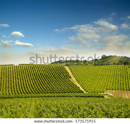 vineyard in Italy - stock photo