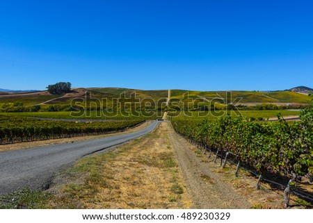 Vineyard in Napa Valley California