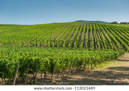 Vineyard in Orcia Valley, Tuscany - stock photo