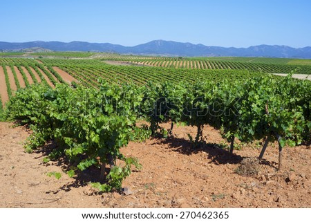 Vineyard in Paniza, Zaragoza province, Aragon, Spain - stock photo