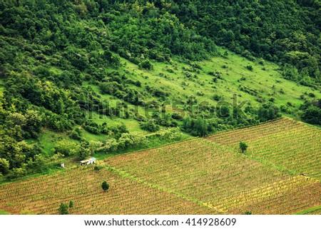 Vineyard in Romania, Europe - stock photo