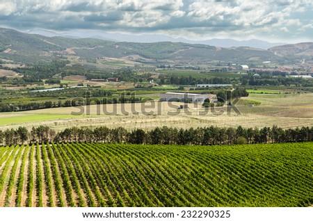Vineyard in Sardinia - stock photo