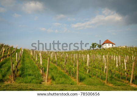 Vineyard in spring. Slovenske Konjice, Slovenia - stock photo