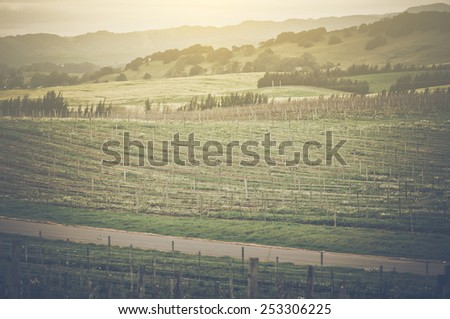 Vineyard in Spring with Vintage Instagram Film Style Filter, blur - stock photo