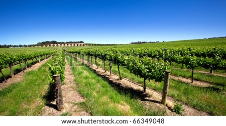 Vineyard in the Barossa Valley, South Australia - stock photo