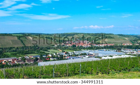 Vineyard in the countryside - stock photo