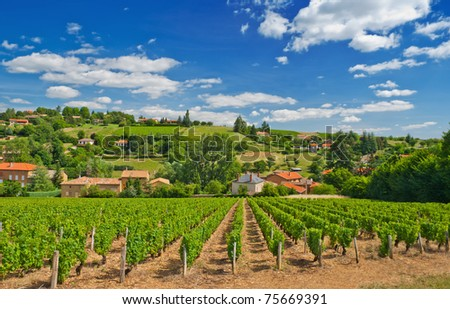 Vineyard in the famous wine making region of Beaujolais, France, during a pleasant summer morning - stock photo