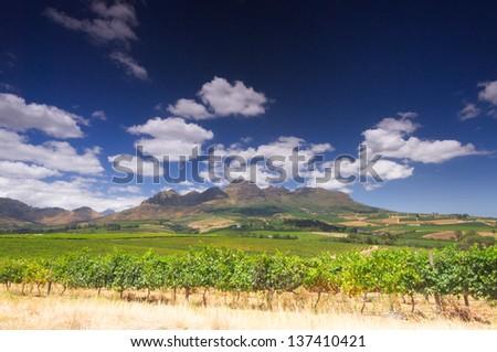vineyard in the hills around Cape Town, Stellenbosch, South Africa - stock photo