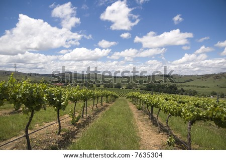 Vineyard in the Hunter Valley NSW Australia - stock photo