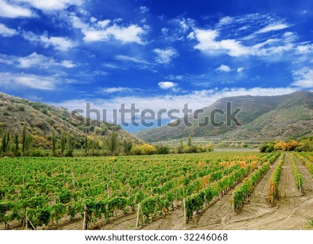 vineyard in the mountain valley