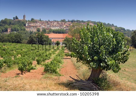 Vineyard in the south of France; La Provence. - stock photo