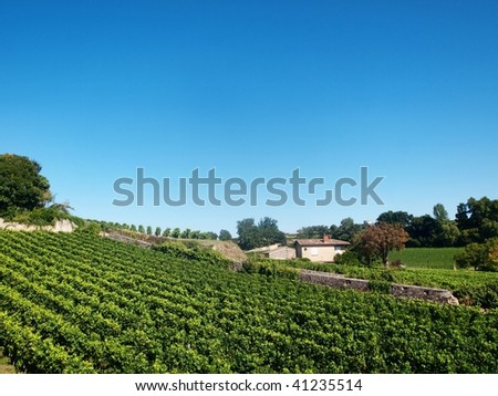 Vineyard in the village of Saint Emilion in France - stock photo