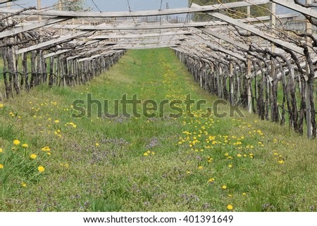 vineyard in the works - stock photo