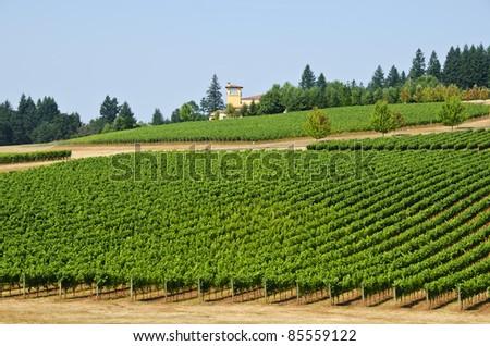 Vineyard in Willamette Valley Oregon - stock photo