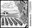 Vineyard landscape black and white - stock vector