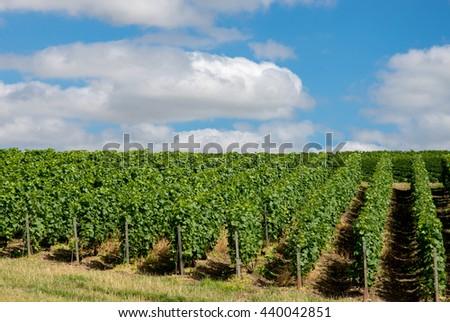 Vineyard landscape in France - stock photo