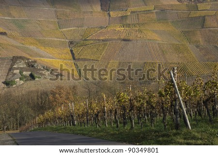 Vineyard landscape in the Mosel Valley, Germany - stock photo