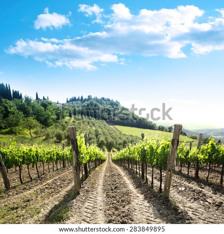 Vineyard landscape of green vines with a beautiful blue sky in Italy in the area of Chianti  - stock photo