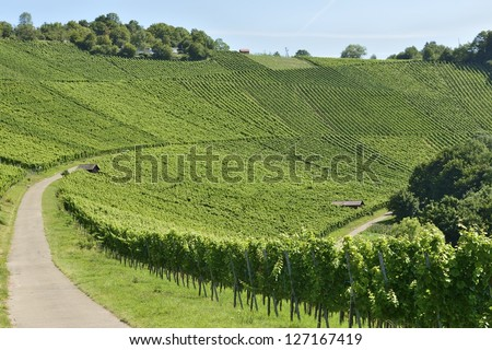 vineyard landscape #3, Stuttgart,  landscape of hilly vineyard with multiple lines of plants on the hills surrounding the important industrial town - stock photo