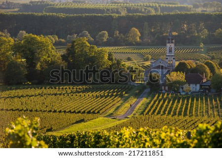 Vineyard landscape-Vineyard south west of France-Sauternes-Loupiac