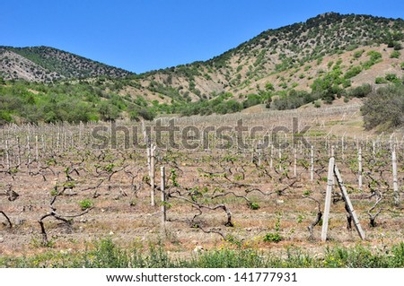 vineyard near hills