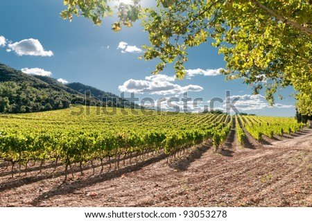 Vineyard near the hills on clear day, Spain - stock photo