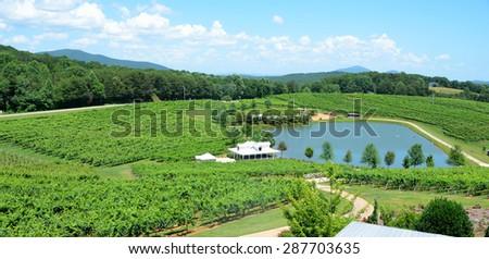 Vineyard North Georgia Wine Country USA - stock photo