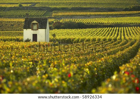 Vineyard of Beaune, Burgundy - stock photo