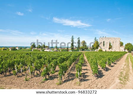 Vineyard of Saint-Emilion in Aquitaine, France.