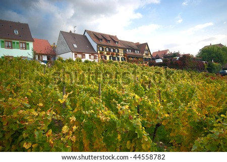 vineyard on a hill with houses on top - stock photo