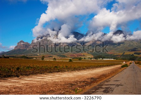 Vineyard on Pleisir de Merle wine farm in autumn. Shot in the early afternoon with blue sky and fluffy clouds covering the mountain, in South Africa. - stock photo