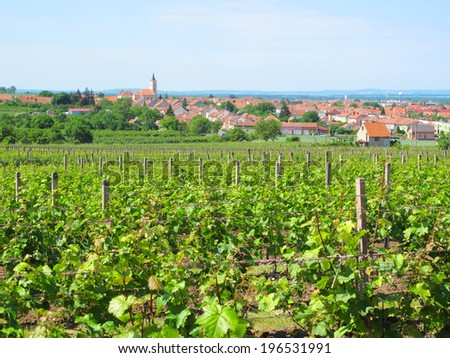 Vineyard over town Velke Bilovice, South Moravia, Czech republic. - stock photo