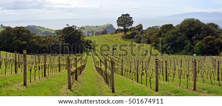 Vineyard panoramic view at Stony Batter on Waiheke Island, Auckland, New Zealand
