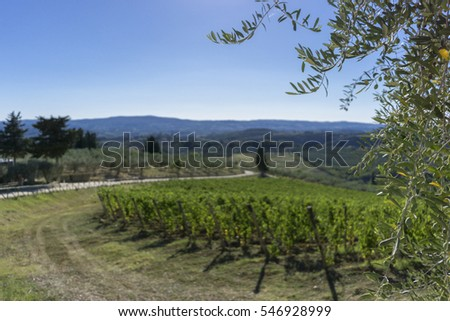 Vineyard road in Tuscan countryside