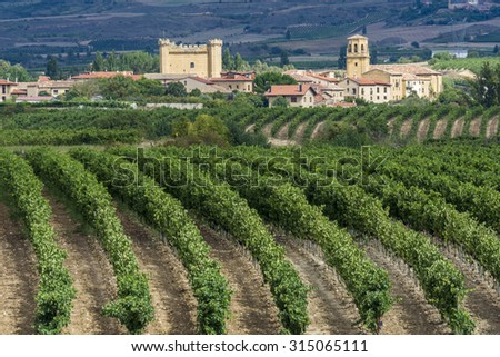 Vineyard, Sajazarra as background, La Rioja (Spain) - stock photo
