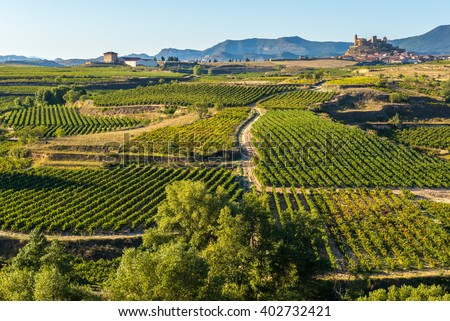 Vineyard, San Vicente de la Sonsierra as background, La Rioja (Spain) - stock photo