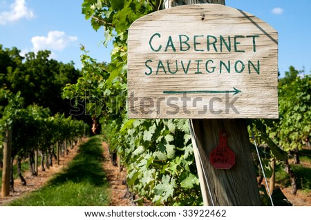 Vineyard sign with arrow pointing to cabernet sauvignon grapes - stock photo